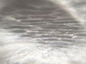 玉ねぎの繊維を顕微鏡でみた様子。